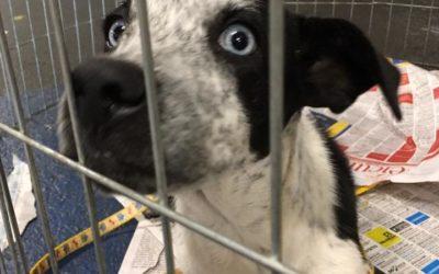 Cachorra para adoção – 4 meses – são josé do rio preto/sp