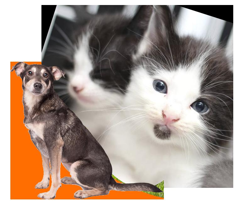 fauna-gato-dog-03